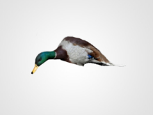 Hunters Product – Mojo Outdoors Duck Decoy 3D Scanning and Modeling